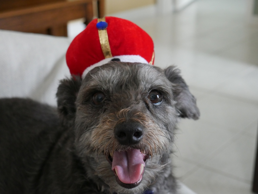 Happy Pup Poetry: If Happy Were aKing